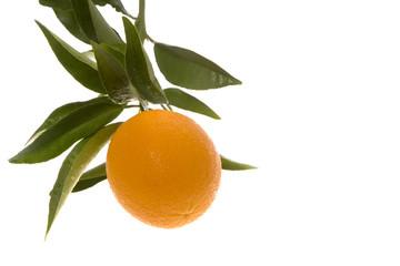 orane hanging in corner of frame