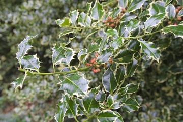 christmas time tree