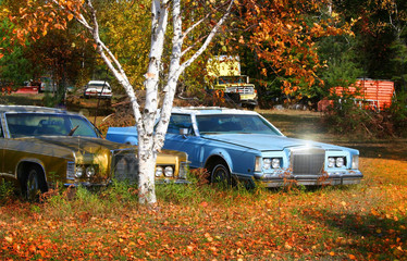 classic cars in the yard