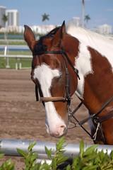 outrider pony
