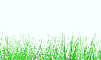 fresh green field on white background