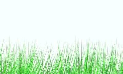 fresh green field on white background