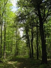 summenr forest