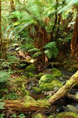rainforest respite