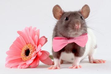 rat near a flower