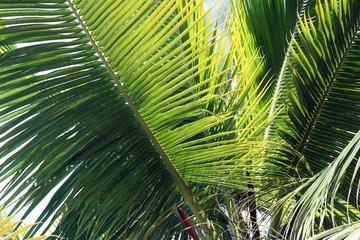 macro palm branches