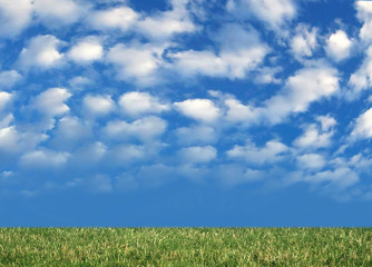 grass and nice blue sky