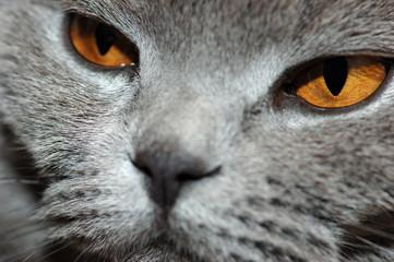 deep yellow eyes