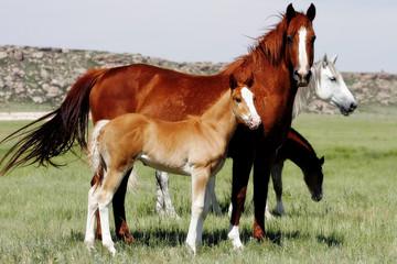 mares & baby horses