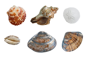 isolated group of seashells