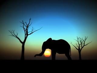 elephant sunrise 12