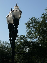 light posts and trees