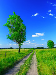 Fotobehang Groene beautiful summer landscape