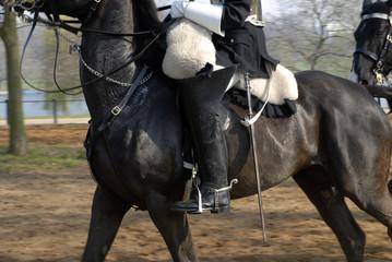 horse guard #4