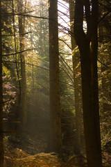 Keuken foto achterwand Bos in mist foret