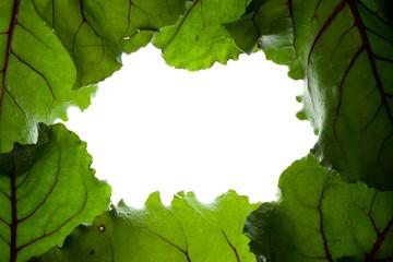 Wall Mural - green beet leaf frame