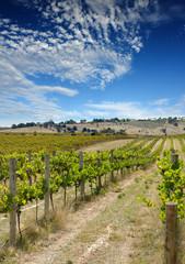 Wall Mural - summer vineyard 2