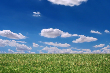 grass, sky and clouds