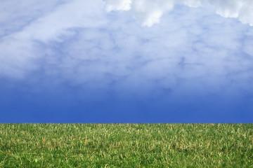 grass and nice blue sky!