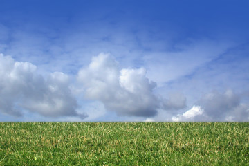grass and cloudy sky!