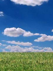 grass and cloudy blue sky!
