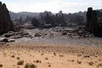 Foto op Aluminium Algerije forêt de pierre sur le tassili n'ajjer