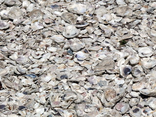 oyster shell pattern