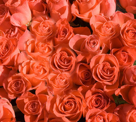 roses flower bunch perfectly flat orange isolated