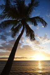 sunset sky framed by palm tree over the pacific ocean in kihei,