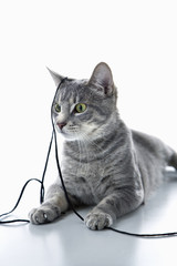 Gray striped cat playing with string.