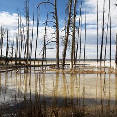 shoreline at yellowstone national park, wyoming.