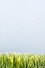 strip of artificial green grass.