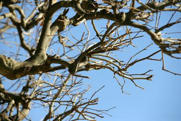arbre - Arbre Sans Feuille