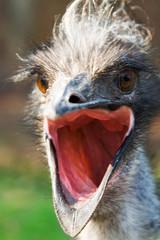 bird emu