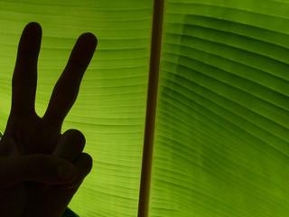 ombre devant feuille de bananier