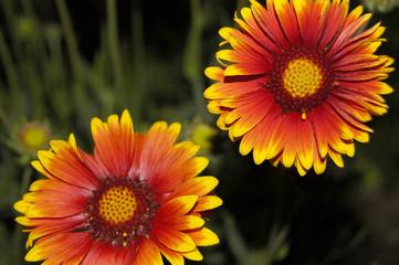 beautiful flowerses