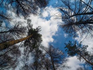 high pines