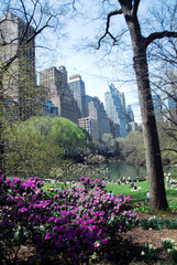central park in spring