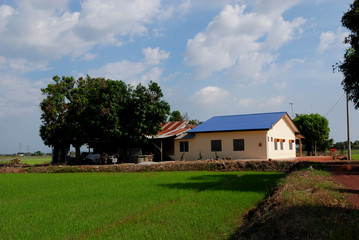 trees, farm house and paddy field