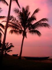 pink coconuts