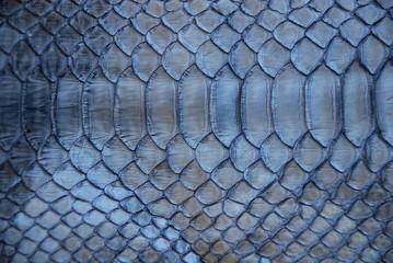 Photo sur Toile Les Textures blue snake