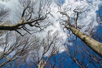 Fotobehang Aan het plafond tops of fall trees