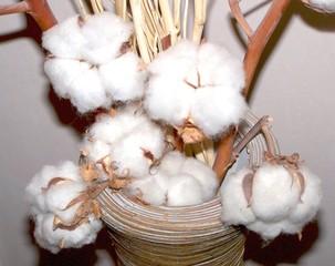 fleurs de coton en vase
