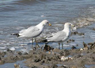 sea gull  gathering at shore