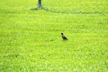 bird and football field