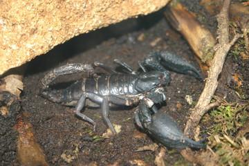2007-05-01 besançon la citadelle scorpion