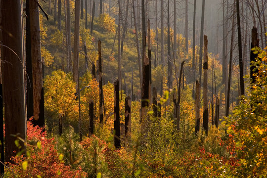 autumn, burnt forest, yosemite