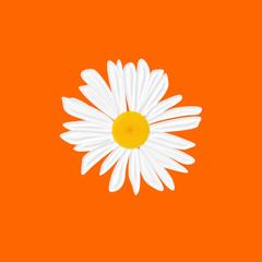 margherita arancione