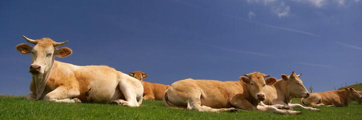 Poster de jardin Vache les vaches au soleil