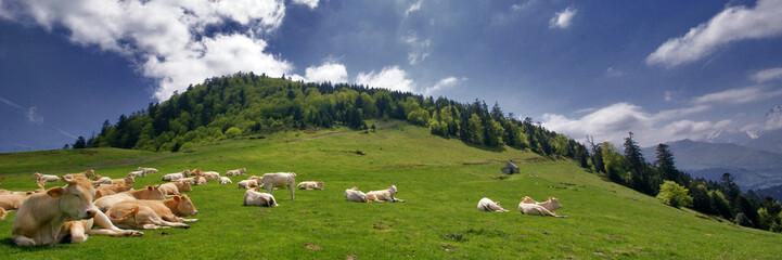 Poster de jardin Vache les vaches à la montagne